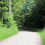perfekte Waldwege