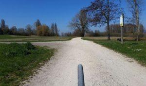 Bodenseeradweg bei Iznang