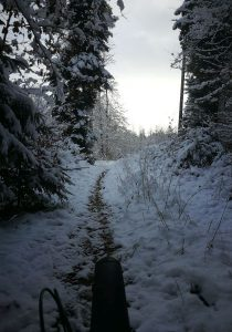 Handbike im Winter, Blick aus dem Wald