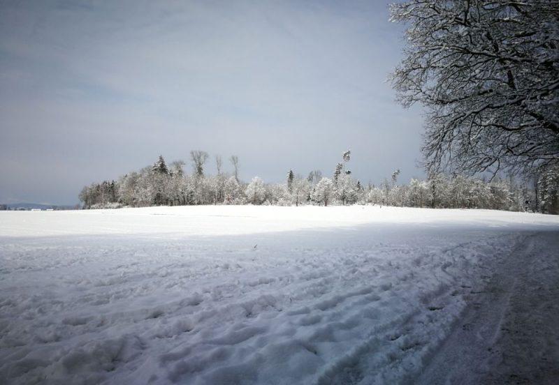 Hardwald im Winter