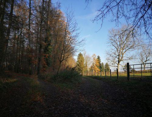 Schaffhausen, Randen Runde