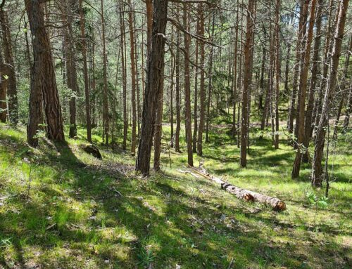 Wallis / Naturpark Pfyn-Finges